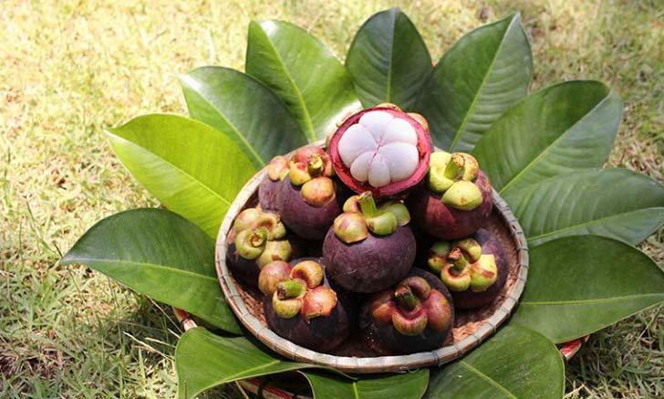 สวนป่าอกาลิโก มังคุดอินทรีย์ สด อร่อย ส่งตรงจากสวน