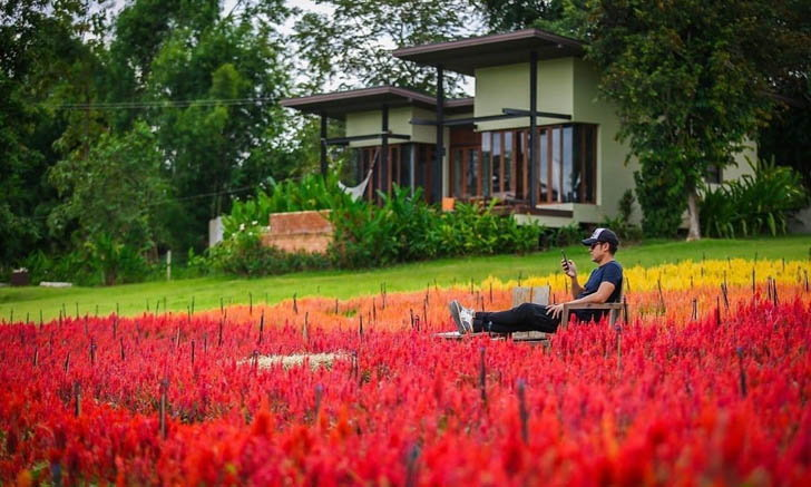 """เที่ยว """"ทุ่งดอกสร้อยไก่"""" ที่ภูริปาย อำเภอปาย เก็บภาพดอกไม้สีแดง ท่ามกลางอากาศเย็นสบาย"""