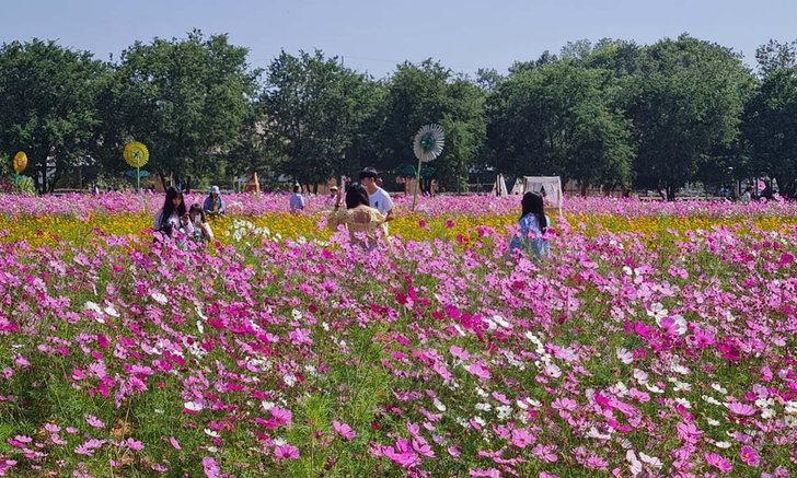 ชมฟรี 1 เดือนเต็ม สวนดอกไม้งานเกษตร 100 ไร่ @ศูนย์ฝึกอบรมและวิจัยทางการเกษตรโคราช