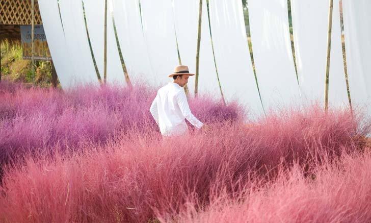 บ้านไร่นายรุ่งเปิดโซนใหม่ ทุ่งดอกหญ้าสีชมพู และสีม่วง ถ่ายรูปแบบปังๆ ใกล้กรุงเทพฯ