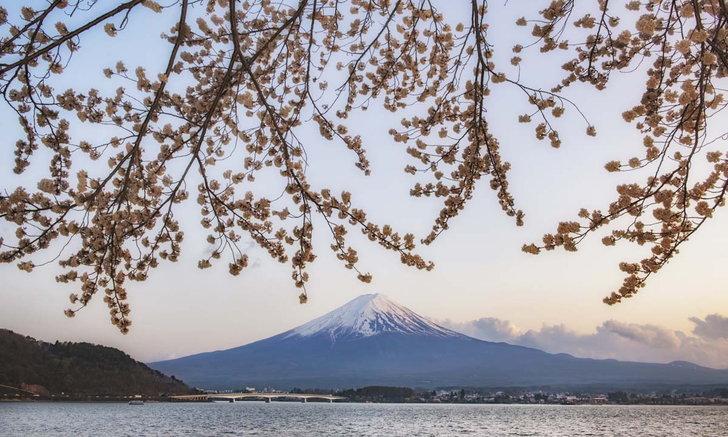 อัปเดตภาพดอกซากุระญี่ปุ่น สวยงามชวนให้คิดถึง