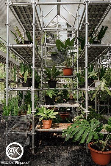 plantmeonthemoon-11