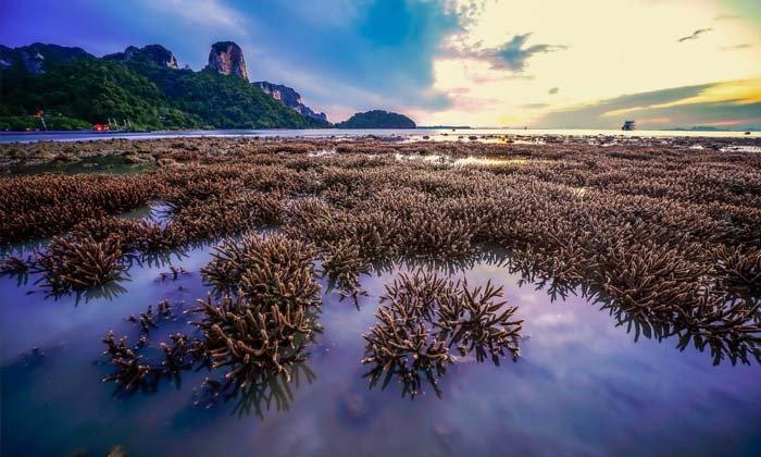 เผยภาพสุดมหัศจรรย์ ปะการังงอกใหม่ที่อ่าวไร่เลย์ กระบี่