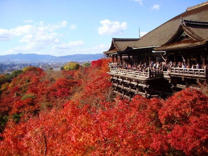 ปฏิทินใบไม้เปลี่ยนสีทั่วญี่ปุ่น! แนะนำแหล่ง&ช่วงเวลาชมใบไม้เปลี่ยนสี
