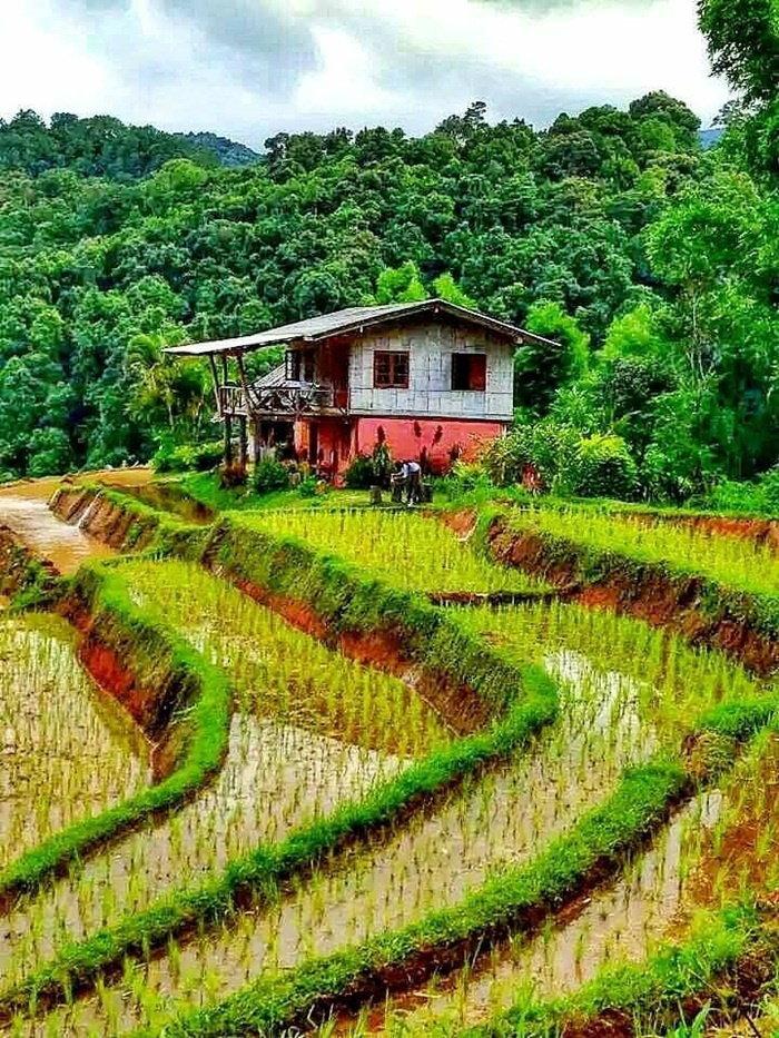 bamboop