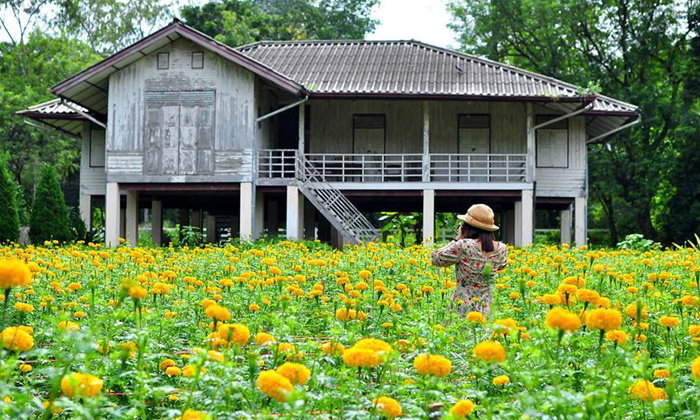 พาเที่ยวสวนดอกดาวเรืองกองวัคซีน ดอกไม้ของพ่อที่บานสะพรั่ง ณ ปากช่อง