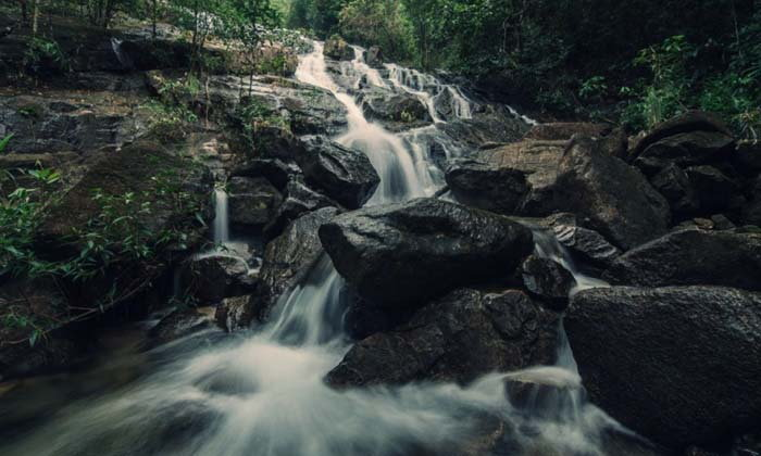 EVERGREEN RANONG จากป่าต้นน้ำสู่ท้องทะเล