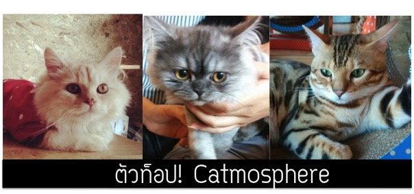 รีวิวเด็กดริ๊งตัวท็อปคาเฟ่แมว Catmosphere เชียงใหม่เจ้า I ปุ๋ย @palouis