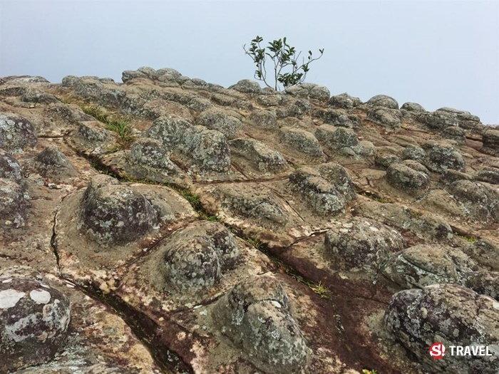 ที่เที่ยวหน้าฝน ภูหินร่องกล้า