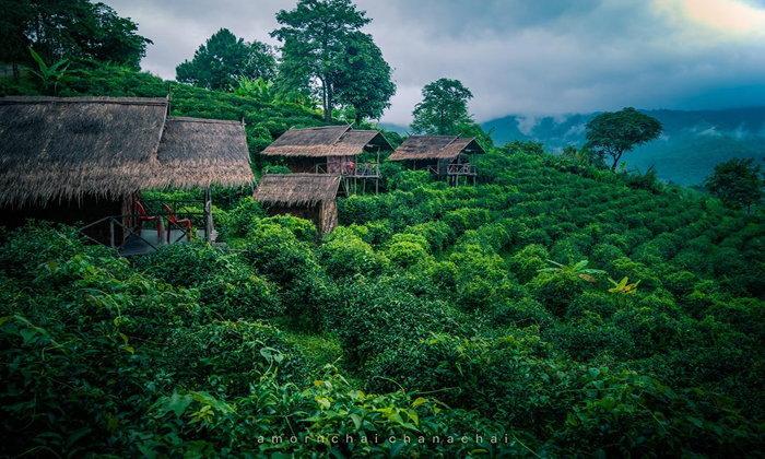 รีวิวบ้านเคียงไร่ชา นอนฟินกลางไร่ชาสูงเสียดฟ้าโอบล้อมไปด้วยสายหมอก