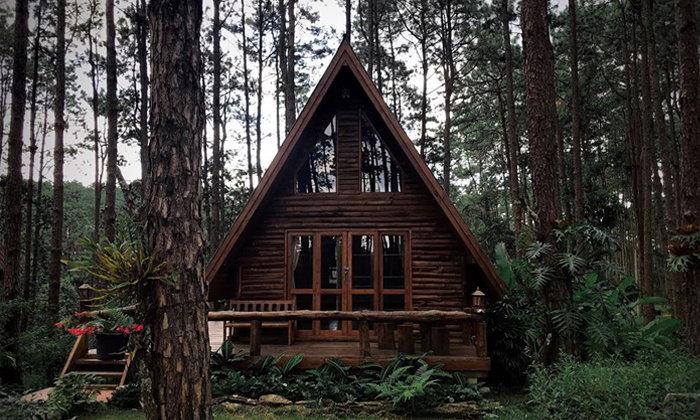 ผลการค้นหารูปภาพสำหรับ สวนป่าดอยบ่อหลวงเชียงใหม่