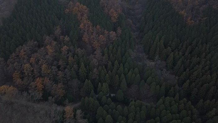 jangseonghealingforest10