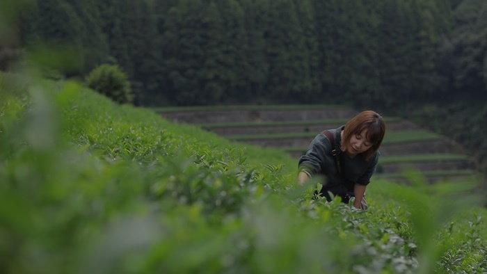 teafarm2