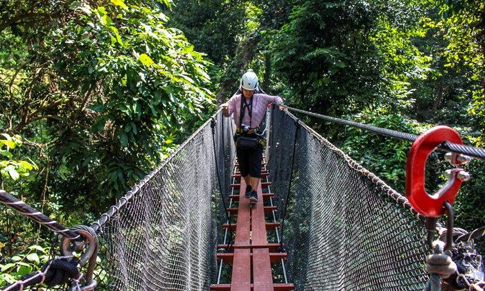 ผลการค้นหารูปภาพสำหรับ เชียงราย DoiTung Tree Top Walk