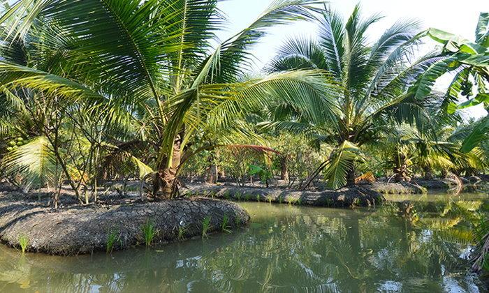 สวนเกษตรแม่ทองหยิบ พายเรือชมร่องสวน  ลิ้มรสผลไม้หวานฉ่ำ @ราชบุรี