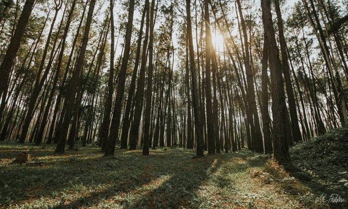 ป่าสนภูผาม่าน โลเคชั่นถ่ายรูปสุดคูล @ขอนแก่น
