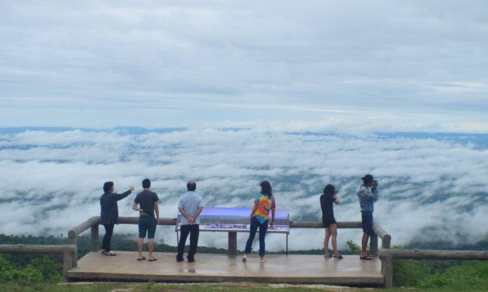 ทะเลหมอกภูหินร่องกล้า ความงดงามแห่งหน้าฝน