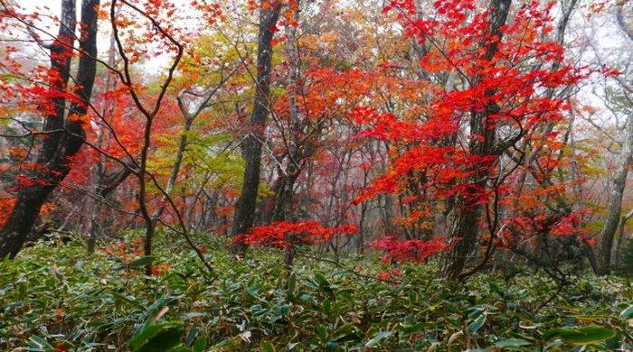 autumn-leaves-hallasan-696x38