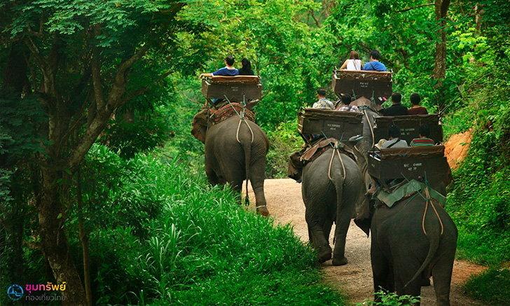 ทัวร์ปางช้างแม่สา นั่งช้างชมธรรมชาติแบบใกล้ชิด