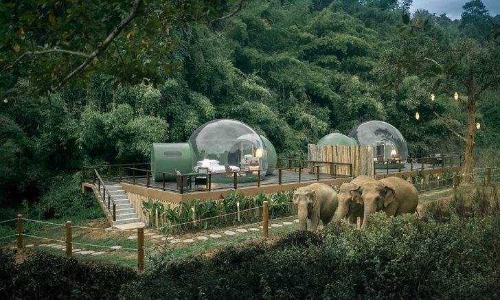 'จังเกิ้ล บับเบิ้ล' โดมใสใจกลางป่า ที่อนันตรา สามเหลี่ยมทองคำ แคมป์ช้าง แอนด์ รีสอร์ท
