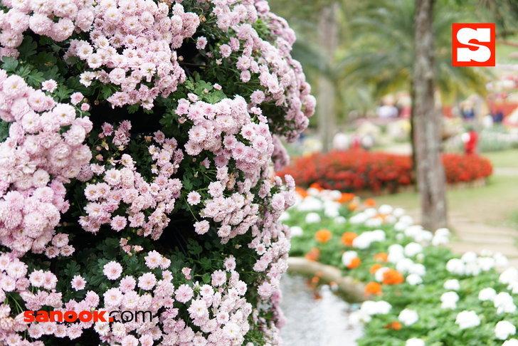 ดอกไม้บนตอยตุงแข่งกันบานสะพรั่ง