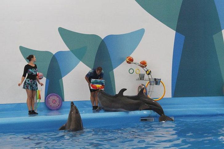 pattaya-dolphinarium4-768x512