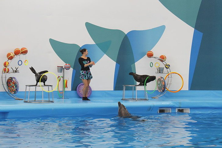 pattaya-dolphinarium2-okhi4tt