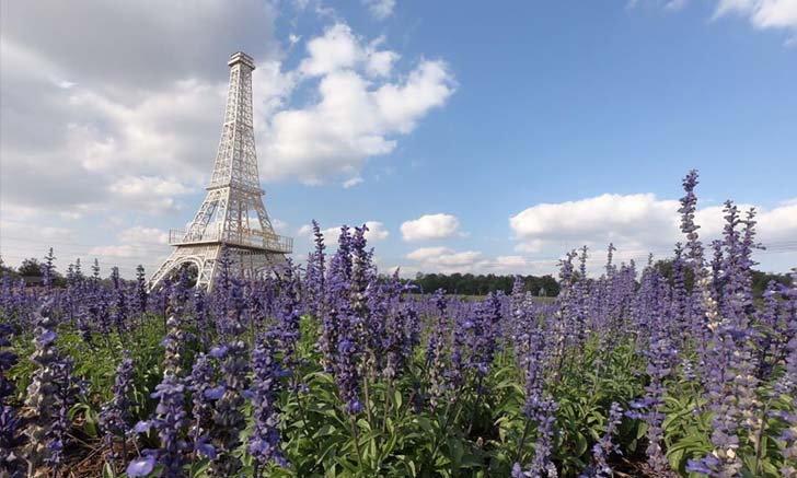 นึกว่าอยู่ปารีส! เที่ยวไร่ภาสทอง ชมหอไอเฟลจำลองกลางทุ่งดอกบลูซัลเวีย