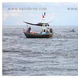 วาฬบรูด้า