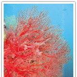 ปะการัง จ. ตรัง