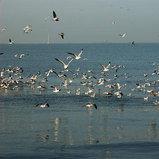 บางปู จ.สมุทรปราการ