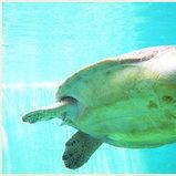 สถานแสดงพันธุ์สัตว์น้ำจังหวัดระยอง