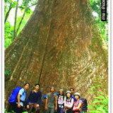 ชาวคณะถ่ายภาพคู่กับต้นไม้ใหญ่ สะท้อนความอุดมสมบูรณ์ของป่าผืนนี้ได้เป็นอย่างดี