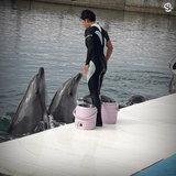 Tsukumi Dolphin Island เกาะแห่งโลมา ปลาดาว เพนกวิน