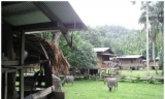 วันฝนฉ่ำฟ้ากลางป่า...อุ้มผางคี