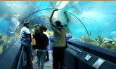 อันเดอร์วอเตอร์ เวิลด์ พัทยา Underwater World Pattaya