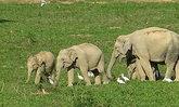 ช้างป่าและกระทิง อุทยานแห่งชาติกุยบุรีเริงร่าหากิน ในวันที่ธรรมชาติสงบ
