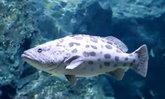 เปิดคลิปดูแลสัตว์น้ำแสนน่ารักใน SEA LIFE Bangkok ช่วง COVID-19 ระบาด