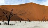 นามิเบีย ดินแดนแห่งสัตว์ป่า ธรรมชาติและต้นไม้กลับหัว