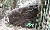 ปิดถ้ำนาคา ! อุทยานแห่งชาติภูลังกา ประกาศปิดถ้ำนาคาตั้งแต่ 9  ก.ย.นี้ เป็นต้นไป