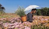 บ้านห้วยสำราญ ดินแดนแห่งดอกไม้ที่ใหญ่ที่สุดของภาคอีสาน