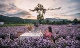 Kuv Niam Forest (กู๊เนียร์ ฟอร์เรส) ทุ่งดอกมาร์กาเร็ตที่ใหญ่ที่สุดของเชียงใหม่!