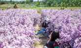 สวนยายสุข พัทยา แหล่งท่องเที่ยวเปิดใหม่ ชมดอกไม้สวยไม่ต้องไปไกลถึงภาคเหนือ