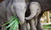 วิกฤติโควิด-19 ปางช้างรีไทร์เม้นท์ขอความกรุณาบริจาคอาหารช่วยช้าง
