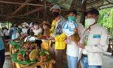 พังงาจัดเที่ยวสวนผลไม้ยุคโควิด เน้นกินทุเรียนสาลิกา ราชาผลไม้พังงา