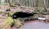 """""""ชีวิตเป็นสิ่งล้ำค่า"""" กฎเหล็กก่อนเที่ยว ป่าอาโอกิงาฮาระ ตำนานป่าอาถรรพณ์ที่เชื่อมโยงเหตุฆ่าตัวตาย"""