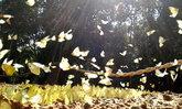 ช่วงเวลาแห่งเทศกาลชมผีเสื้อ ปางสีดา มาถึงแล้ว ตระการตาผีเสื้อนับ 400 สายพันธุ์!!