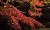 5 จุดชมใบไม้แดงในโตเกียว วิวดีๆ เดินทางง่ายๆ