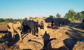 สัมผัสใหม่แห่งการนอน โฮมสเตย์กลางนาที่แท้จริง หมู่บ้านโป่งศรีนคร