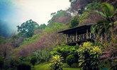 เตรียมชมซากุระประเทศไทยกลางหุบเขา ดอกพญาเสือโคร่งขุนช่างเคี่ยน